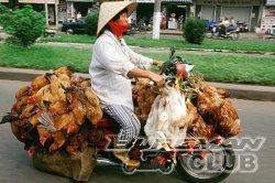 Мотоцикл – и никаких птиц!